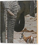 African Waterhole Wood Print