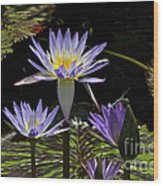 African Waterlily Dazzle -- Plus Dragonfly Wood Print