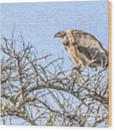 African White-backed Vulture Wood Print