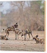 African Wild Dogs Wood Print