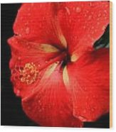 Georgia Red Hibiscus After A Rain Greensboro Georgia Art Wood Print