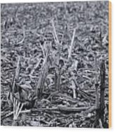 After The Harvest Wood Print
