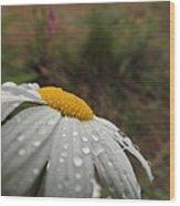 After The Rain Daisy Wood Print