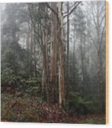 After The Rain. Wood Print