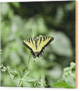 Afternoon Butterfly Wood Print