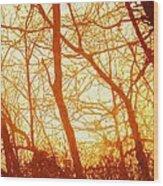Afternoon Love  Wood Print