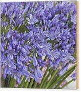 Agapanthus Flower Stalk Display At Florist Wood Print