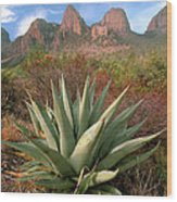 Agave And The Chisos Mountains Wood Print
