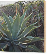 Agave At Sunset Wood Print