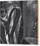 Agave Black And White Dsc08571 Wood Print