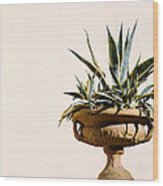 Agave In Pot Wood Print