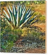 Agave In Secret Mountain Wilderness West Of Sedona Wood Print