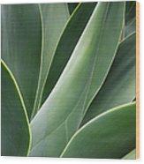 Agave Plant Wood Print