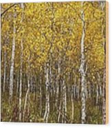 Age Pitted Aspens Wood Print