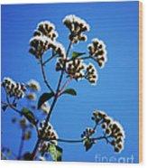 Ageratina Adenophora  Wood Print