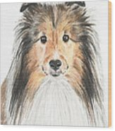 Agility Dog Sheltie In Pastel Wood Print