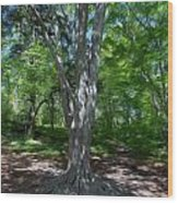 Aging Gracefully Wood Print by Kelvin Booker