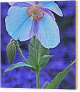 Aglow In Blue Tall View Wood Print
