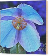 Aglow In Blue Wide View Wood Print