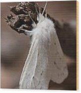 Agreeable Tiger Moth Wood Print
