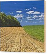 Agricultural Landscape - Young Corn Field Wood Print