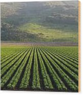 Agricultural Rows Wood Print