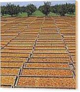 Agriculture - Blenheim Apricots Wood Print