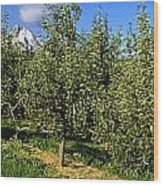Agriculture - Bosc Pear Orchard Wood Print