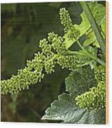 Agriculture - Cluster Of Wine Grape Wood Print