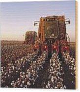 Agriculture - Cotton Harvesting  San Wood Print