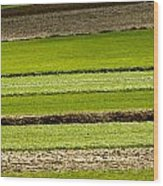 Agriculture Layers Fields And Meadows Wood Print