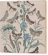 Agrotidae - Hadenidae Wood Print