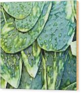 Aguave Wood Print by Mark Goebel
