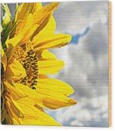Ah Sunflower Wood Print