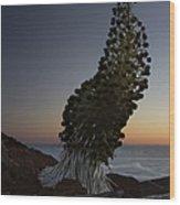 Ahinahina - Silversword - Argyroxiphium Sandwicense - Summit Haleakala Maui Hawaii Wood Print