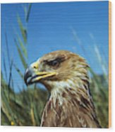 Aigle Imperial Aquila Heliaca Wood Print