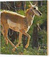 Airborn Pronghorn Wood Print