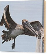 Airborne Brown Pelican Wood Print