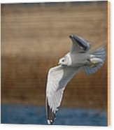 Airborne Seagull Series 1 Wood Print