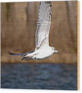 Airborne Seagull Series 2 Wood Print
