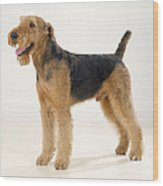 Airedale Terrier Dog Wood Print