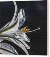 Ajo Lily Close Up Wood Print by Robert Bales