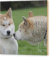 Akita Inu Dogs, Old And Young Wood Print