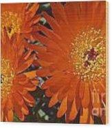 Orange Burst Akuli Kuli Wood Print