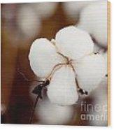 Alabama Cotton Wood Print
