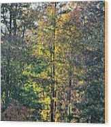 Alabama Forest In Autumn 2012 Wood Print