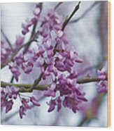 Alabama Redbuds Wood Print