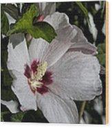 Alabama Wildflower -  Woolly Rose Mallow Wood Print