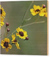 Alabama Wildflowers Coreopsis Tinctoria Tickseed Wood Print