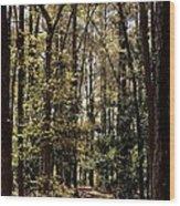 Alabama Woodlands In Spring 2013 Wood Print